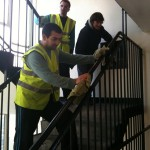 Gardening and Communal Area Cleaning in Tower Hamlets