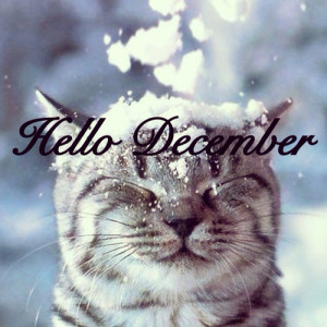 hello december fastklean