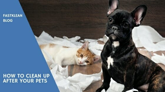how to clean after pets - cat and dog mess