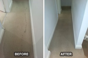 Carpet Cleaning 15