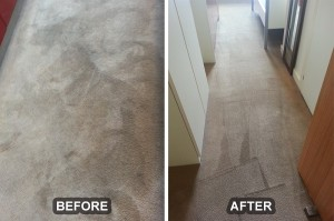 Carpet Cleaning 21
